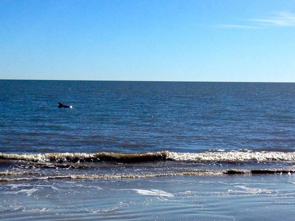 Hilton Head Dolphin Tour