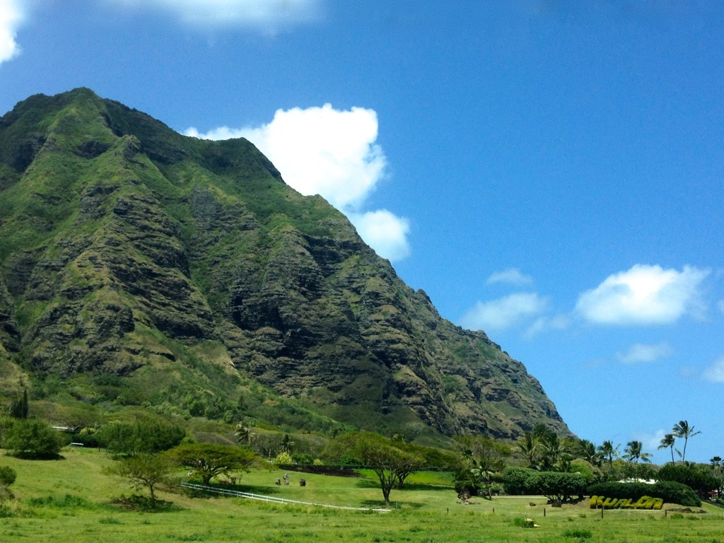 Oahu moutons along coast